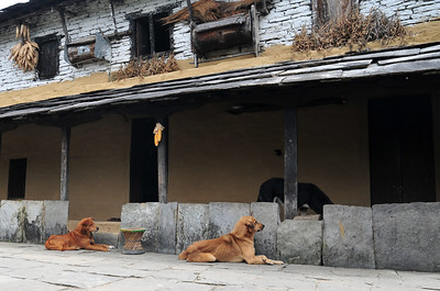 Village life - dogs, corn, some other stuff?
