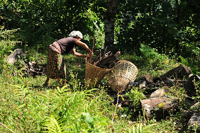 Collecting firewood