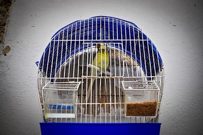 Птичка - висит на наружной стене