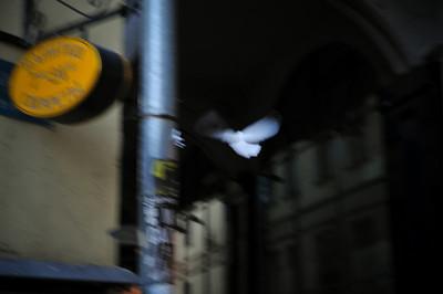 Тема нерезких голубей развивается в Северной Столице. Вот красавец с Красной Площади: http://www.byvic.com/gallery/8803697_s24sq#582905363_gWJWi-A-LB