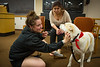 Stress Relief Dogs with Students in the Health Science Library<br /> <br /> Photographer: Douglas Levere