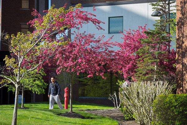 Individuals walk along the acadmeic spine on North Campus framed by the blossoming trees. <br /> <br /> Photographer: Meredith Forrest Kulwicki