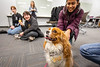 Students enjoy end-of-the-semester activities at the Silverman Library as part of the UB Libraries' Stress Relief Days in December 2019. The offerings included therapy dogs, ping pong, and aromatherapy bracelets. <br /> <br /> Photographer: Douglas Levere