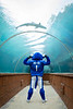 UB mascot Victor E. Bull takes a tour of the Atlantis Paradise Island Bahamas on Dec. 19, 2019. He stopped by the pools, the Predator Tunnel, the beach and the pool. <br /> <br /> Photographer: Meredith Forrest Kulwicki
