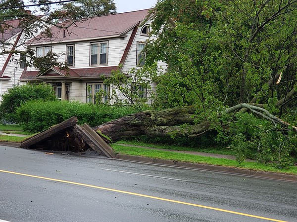 Storm Blew Over A Tree