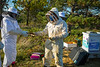 Dave Hoekstra, with Biological Sciences, works with others, to winterize the beehives near Crofts Hall in October 2020. <br /> <br /> Photographer: Douglas Levere<br /> <br /> This image has been approved by UB's Office of Environment, Health and Safety to align with current (fall 2020) health and safety regulations during the COVID-19 pandemic.
