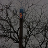 11-10-2011, Utility Pole, Pittsgrove Twp  Olivet Rd  and Husted Station Rd  (C) Edan Davis, sjfirenews com