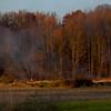 11-19-2011, Brush, Upper Pittsgrove Twp, Monroeville, 370 Monroeville Rd  (C) Edan Davis, sjfirenews com