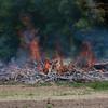 06-11-2012, Brush, Pilesgrove Twp  (C) Edan Davis, www sjfirenews com (4)