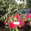 06-29-2012, Storm Damage, Southern NJ, (C) Edan Davis, www sjfirenews com (8)