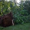 06-29-2012, Storm Damage, Southern NJ, (C) Edan Davis, www sjfirenews com (1)