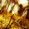 """Tree Shot"" (digital photography on metal print) by Daniel Rothenberg"
