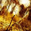 """Tree Shot"" (digital photography on metal print) by Daniel Rothenberg"
