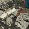Dinosaur dig. That's a Camarasaurus leg bone.