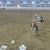 Cody rodeo.