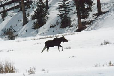 Yellowstone 2016 Highlights