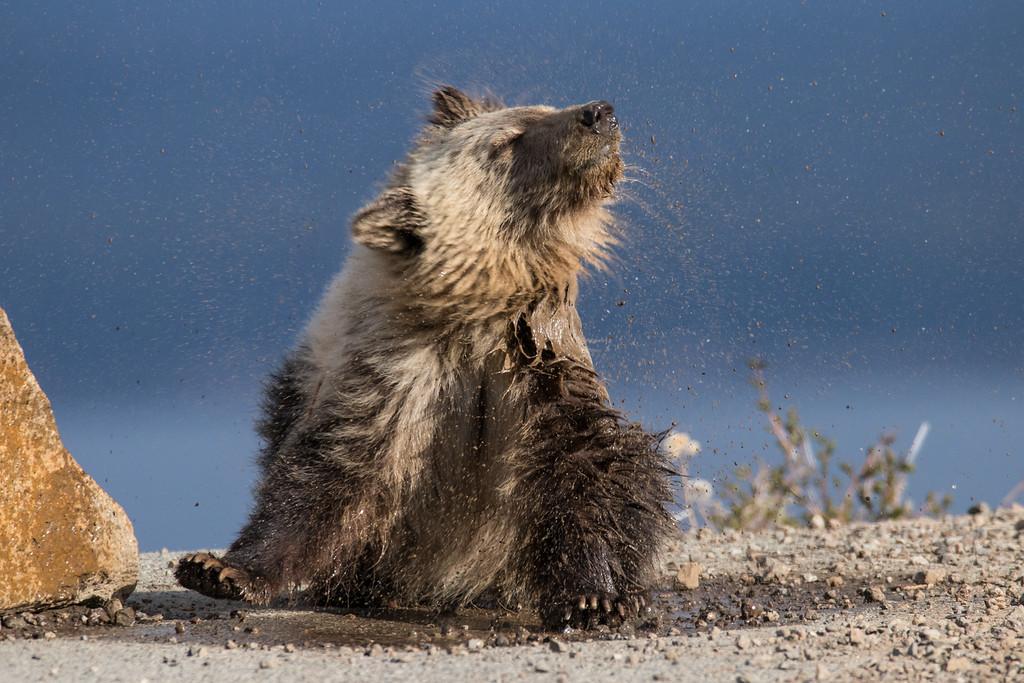 IMAGE: https://photos.smugmug.com/Yellowstone-2016/i-SXTWCnL/0/XL/ys%204-382-XL.jpg