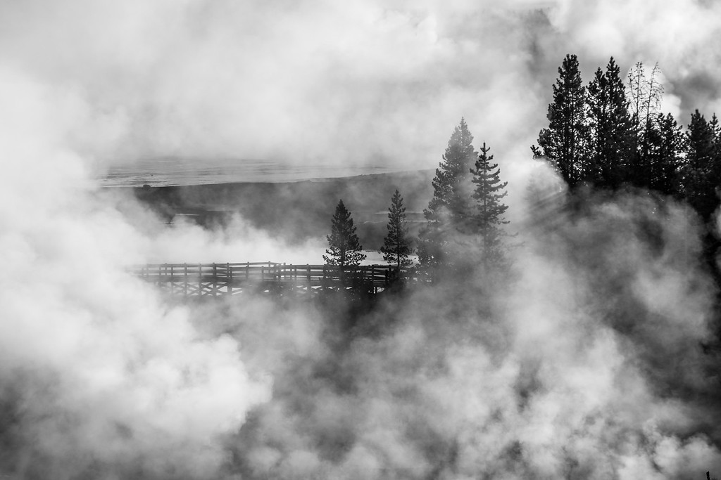 IMAGE: https://photos.smugmug.com/Yellowstone-2016/i-gsHg57Q/0/95b746f6/XL/ys%2014-879-XL.jpg