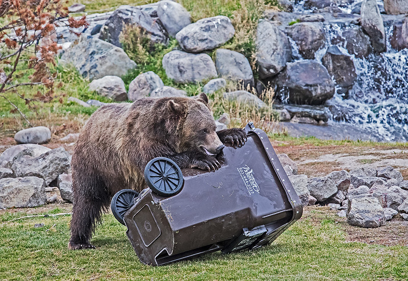 Product Testing Bear