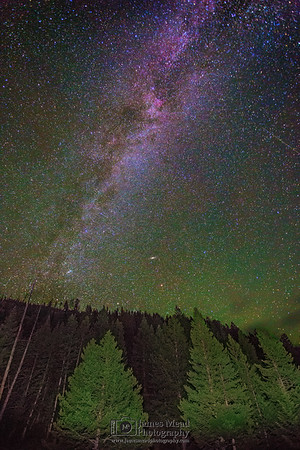 """""""Galactic Forest,"""" The Milky Way over Longpole Pines, Yellowstone National Park, Wyoming"""