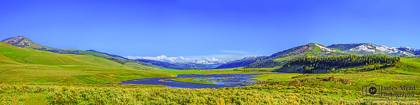 """""""The Last Frontier,"""" Lamar River Valley in the Spring, Yellowstone National Park"""