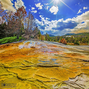 """Golden Glass,"" Upper Terraces, Mammoth Hot Springs, Yellowstone National Park"