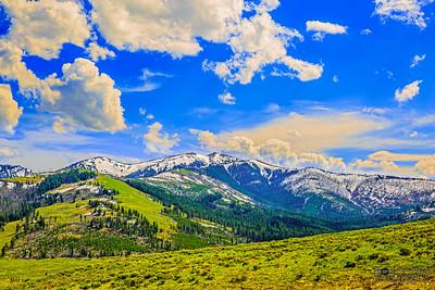 """Washburn Gold,"" Golden Hour over Mount Washburn, Yellowstone National Park, Wyoming"