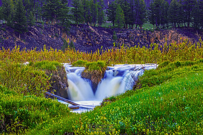 """The Meadow's Brook,"" Yellowstone National Park, Wyoming"