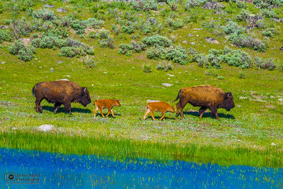 """A Walk by the River,"" Yellowstone National Park"