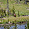 Fire Hole River with Elk grazing net to the river.
