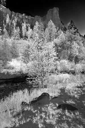 This is the same cabin view but due to the great contrast of the various shades of green I could not pass up the opportunity to produce this in infra red.