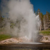 Riverside Geyser along the Firehole River.
