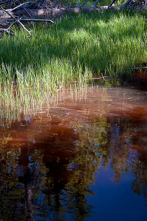This tributary from Yellowstone Lake along Storm Point Trail had this red coloration in the water giving the appearance of oil but appears to be mineral runoff.