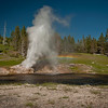 Riverside Geyser along the Firehole River erupting and leaving a beautiful rainbow in its aftermath.