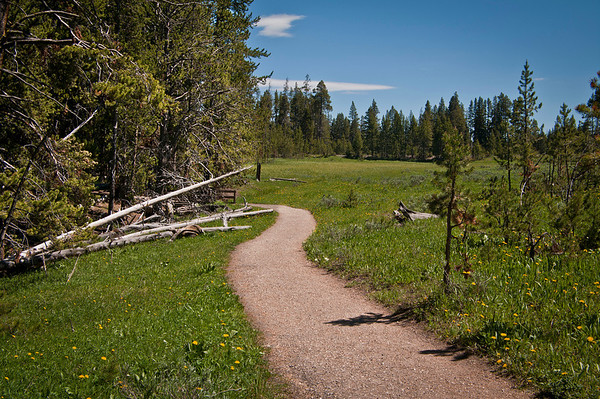 Part of the South Rim Trail.