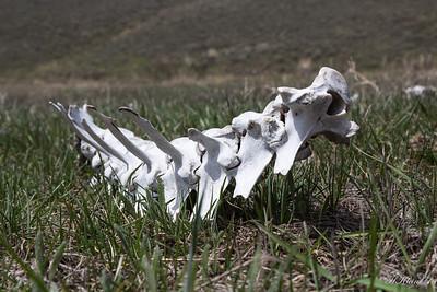 Yellowstone, May 2014 (15 of 194)
