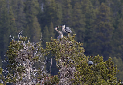 Herons are wading birds...really!?