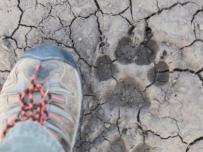 Yellowstone, May 2014 (17 of 194)