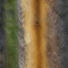 Blur of large scar on a big Lodge Pole Pine tree...