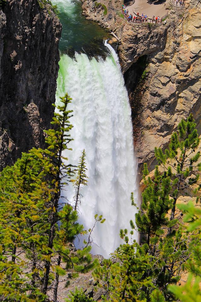 Lower Yellowstone Falls - Yellowstone National Park