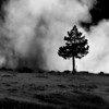"Yellowstone National Park: Jessie, 16 - ""The Smoke and the Tree"""