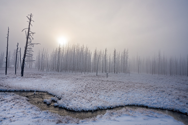 Winter Scene in the Lower Geyser Basin