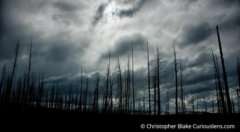 Yellowstone Dead Trees-1