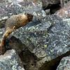 Marmot's Rock