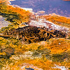 Thermophiles, Upper Terrace, Mammoth Hot Springs