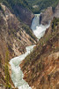 Lower Falls, Yellowstone River, Yellowstone - from Artist's Point