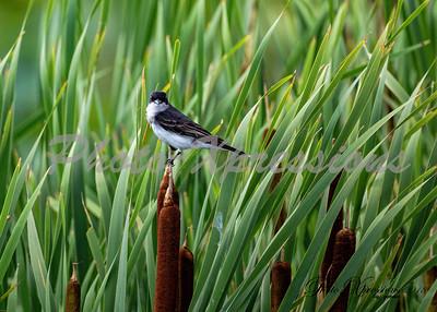 just a bird_0518