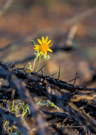 flower-sm_6249