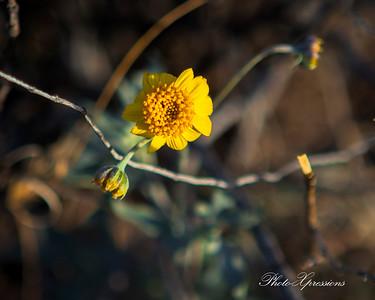 flower-sm_6265