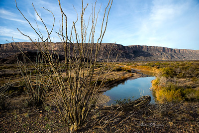 bush river-sm_6268